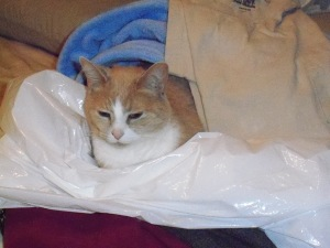 Curled up with Goodwill donation