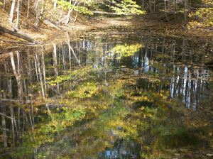 Leaf catcher pond