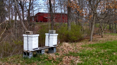 Buzzing bee hives