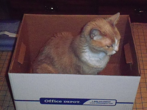 Cat in the box (Shelby)