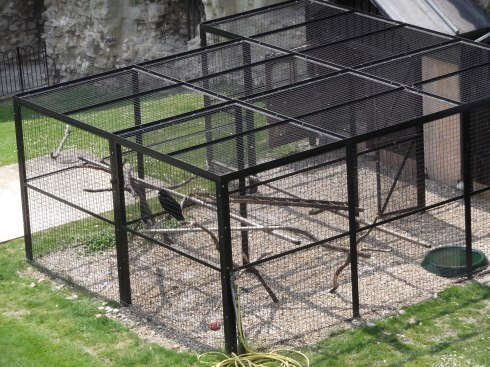Raven cage, Tower of London, 2012