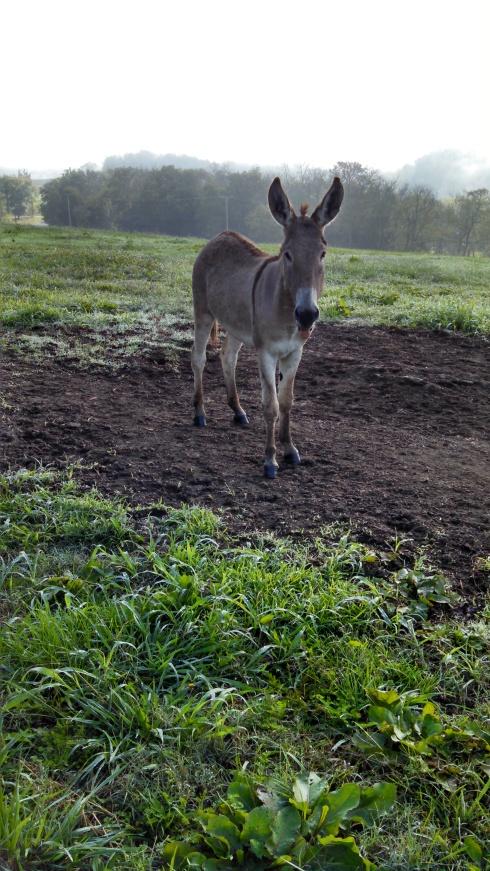 Cousin Louisa, born and raised on Nina Bay Farm