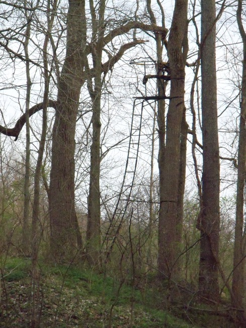 My personal experience climbing trees does not involve a ladder. It does for deer hunters. The season is weeks away.