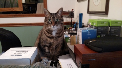 "Office assistant ""Eve"" approves"